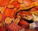 Krafttier Schlange/Natter