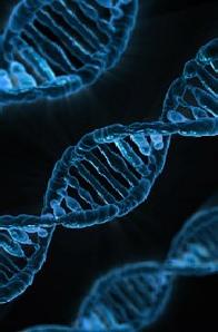 In der Form der Spirale: Die Genstruktur