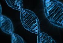 Genstruktur des Menschen