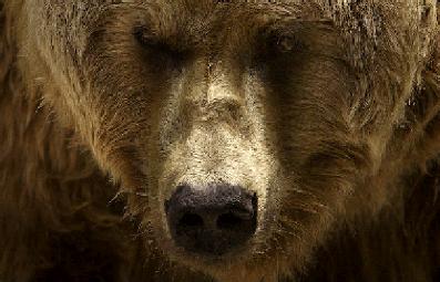 Bärenmedizin